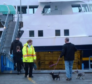 A marine highway staffer watches as passengers and dogs reboard the ferry Matanuska before departing Wrangell Jan. 16, 2013. (Ed Schoenfeld/CoastAlaska News)