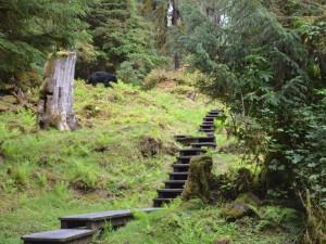 anan trail