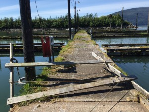 Unusable dock at Shoemaker Bay Harbor