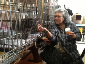 Dolores Klinke feeds cats in her garage at St. Frances Animal Rescue - Photo by Shady Grove Oliver/KSTK