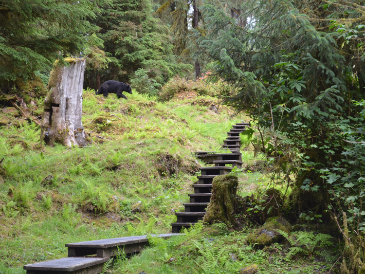 Wrangell district hopes to redesign Anan trail and deck