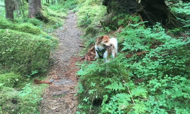 Board of Game rejects Ketchikan trapping setback resolution