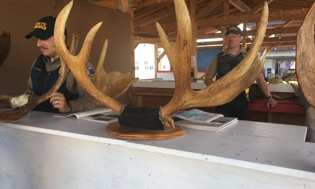 Sportsmen, charities to distribute moose meat in Wrangell