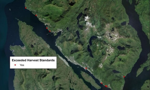 Bacteria levels high at Ketchikan beaches, shellfish harvest sites this summer