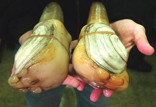 'In shock': Coronavirus sidelines Southeast Alaska dive fishermen